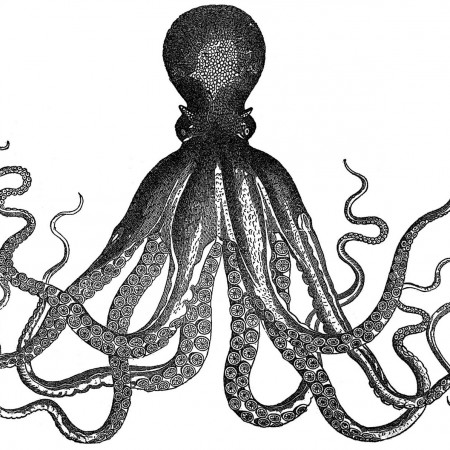 1a-octopus-graphicsfairy004bw2